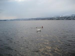 3 New Year's Swims
