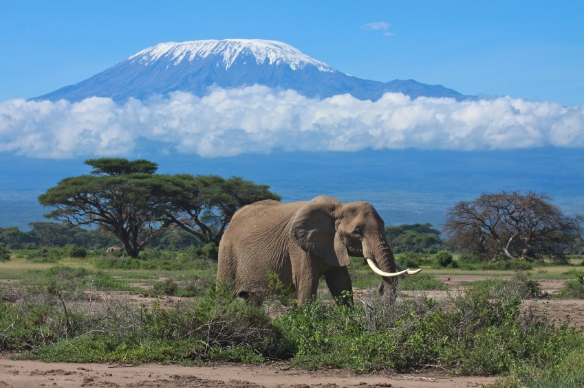 Next Project: Peace Run Africa – Carrying the Torch up Mt. Kilimanjaro !